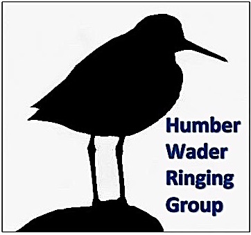 Report a ringed bird